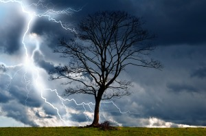 Tree And Storm 2 by George Hodan